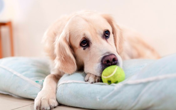 Serviced apartments family dog