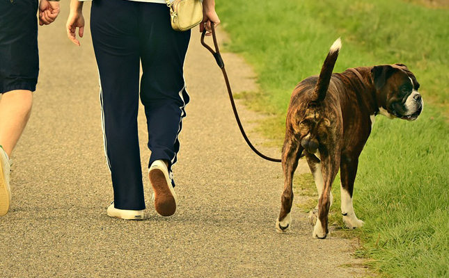 Image of two people walking their dog